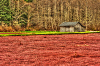 Cranberry Bog - Long Beach, WA